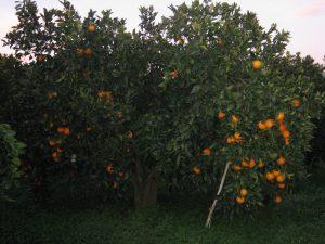 Fruttalio