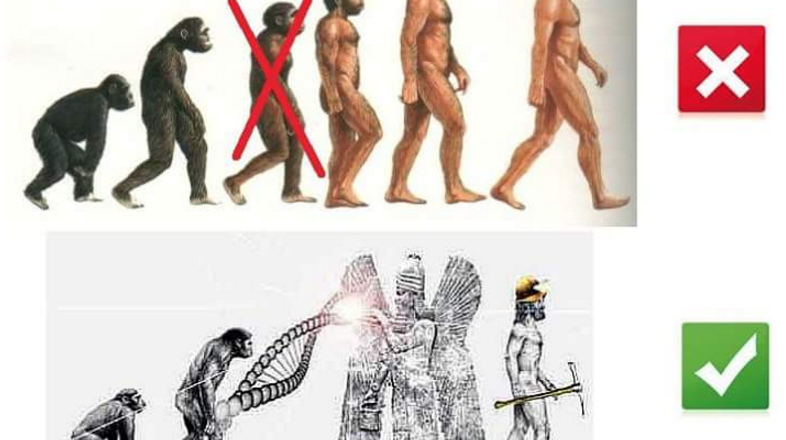 Fruttariani, falliti, frugivori e ibridazione umana