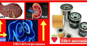 L'importanza degli organi filtro
