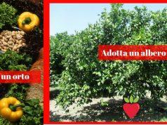 adotta albero e orto